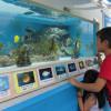 ソラシド、熊本・益城町で「美ら海出張水族館」