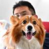 JAL、愛犬と沖縄へ 機内も一緒、ワンワンJET第2弾