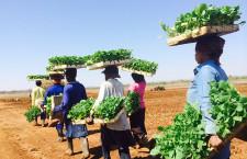 アフリカ初のバイオ燃料旅客便 タバコ植物でボーイングら