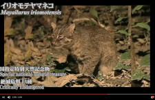 JALグループ、奄美・琉球のプロモ動画 世界遺産登録を支援