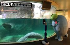 休館中の水族館を遠隔観賞 ANA系ベンチャー、香川・新屋島水族館で