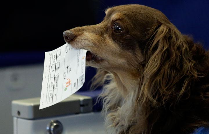 ANA、愛犬と長崎へ 5月にわんわんフライト5年ぶり