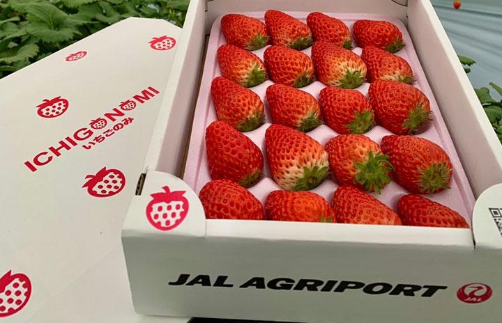 JAL、自社栽培イチゴの通販開始 成田空港近くに農園